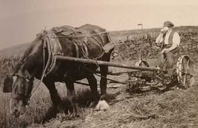 Mowing-at-Highfields-with-a-Bamford-One-Horse-Mower