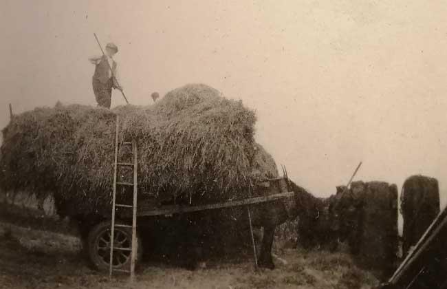 Haymaking at Highfields