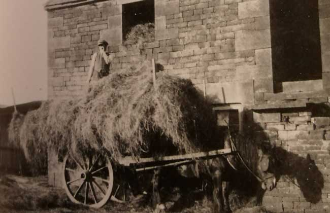 pitching-hay-into-the-barn-at-highfields